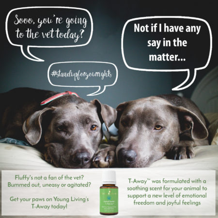 Can I share Essential Oils with my Pets